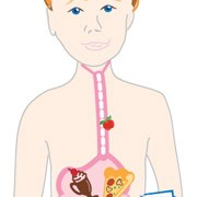 Sfaturi pentru a preveni diareea
