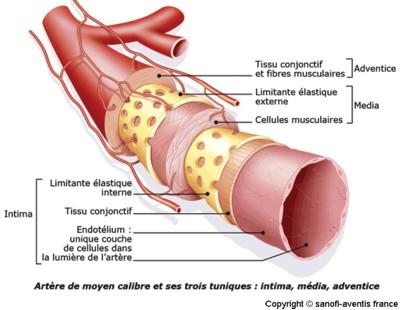 Protejarea arterelor