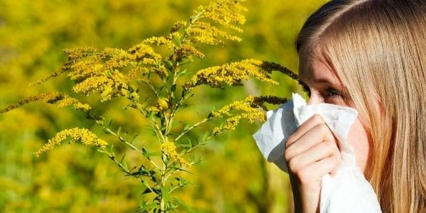 Alergia alarmanta la Ambrozia